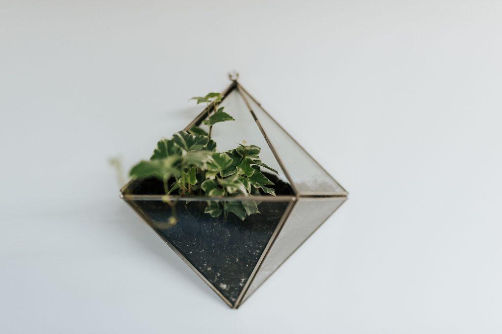 Geometric Terrarium Workshop at Urban Jungle