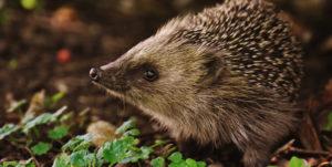 Hedgehog Fun Day