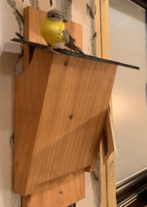 Tree Creeper Box £22, Street Forge .JPG