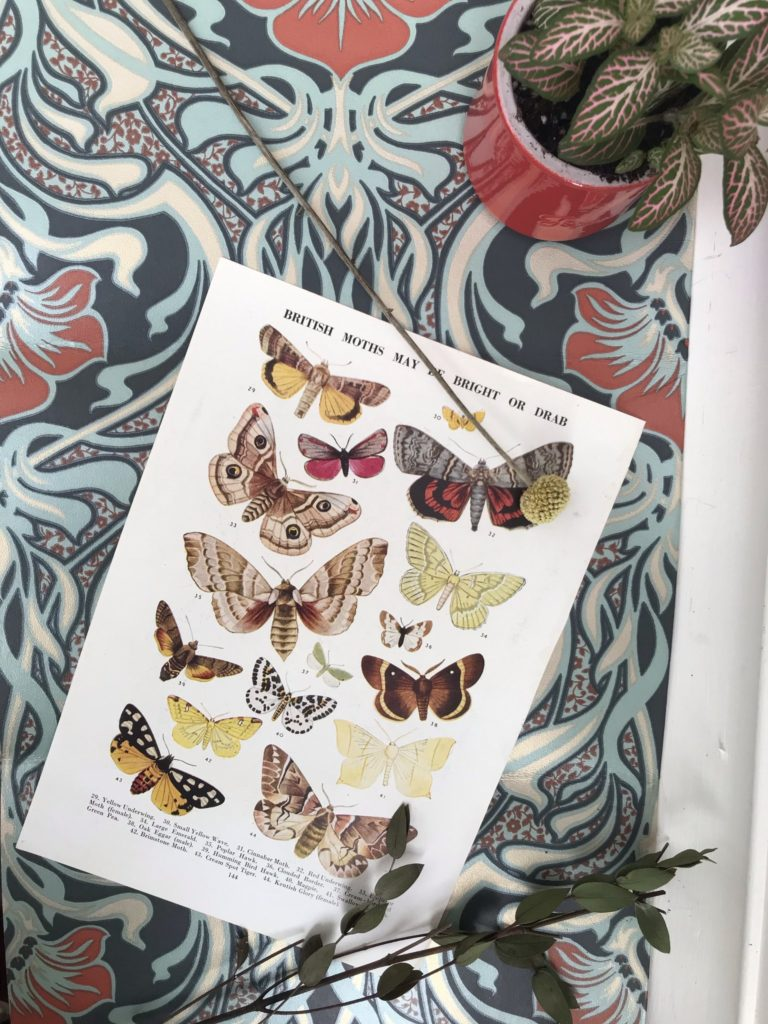 Butterfly print from Stone & Sage