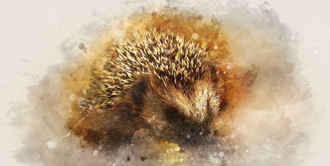 7 ways to make your Suffolk garden more wildlife-friendly this autumn